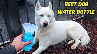 Witch is the Best Dog Water Bottle?