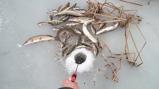 Такая рыбалка запомнится на всю жизнь