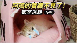 【阿瑪的寶藏不見了!】志銘與狸貓|貓奴急診室密室逃脫Ep02