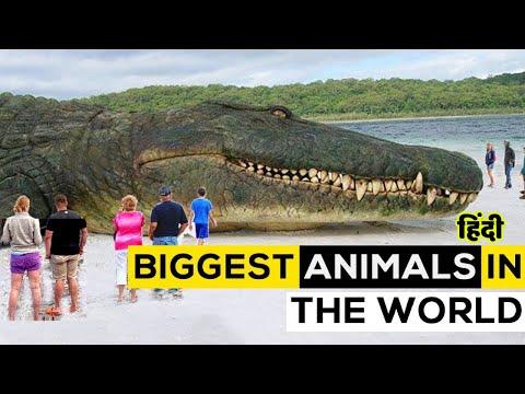 दुनिया के सबसे बड़े जानवर Biggest Animals in the world