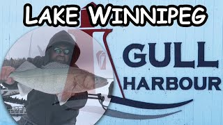 Ice Fishing Lake Winnipeg   Gull Harbour Greenbacks!!