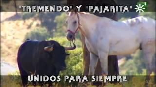 PGM 500 LA YEGUA Y EL TORO