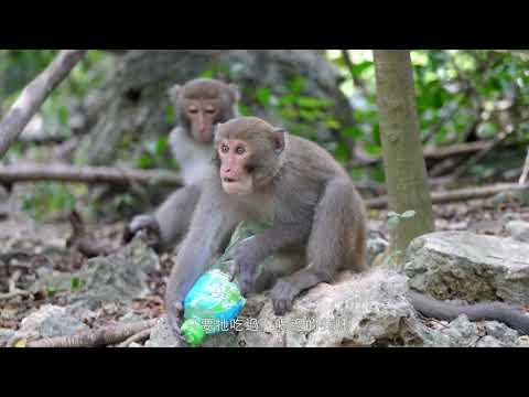 猴諧和諧 (2018 國語版)