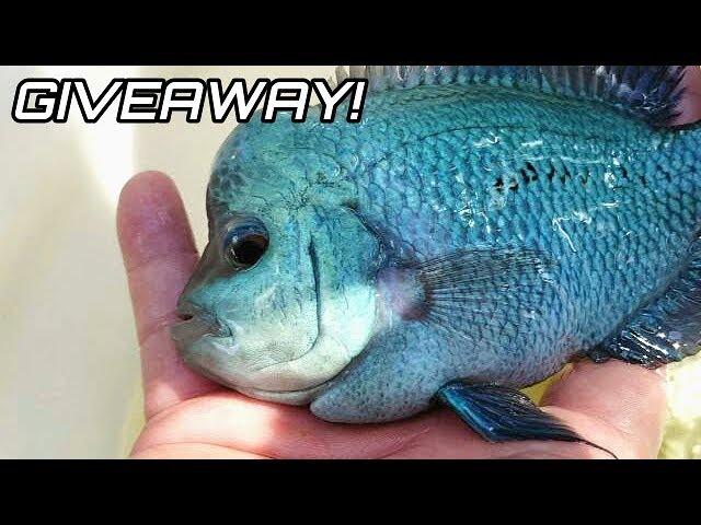 Colorful Aquarium Fish GIVEAWAY