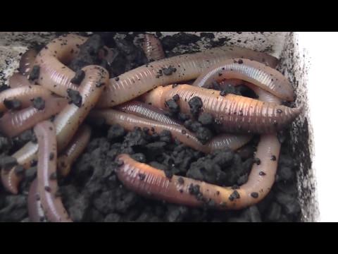 Die Speziese der Forschung der Parasiten