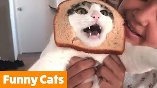 Funniest Cute Cats | Funny Pet Videos