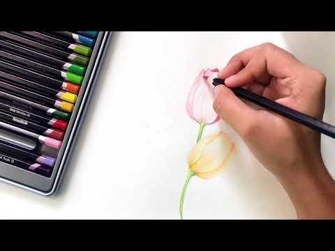 Easy tulip pencil color tutorial   beginner's pencil color tutorial   sketch with me