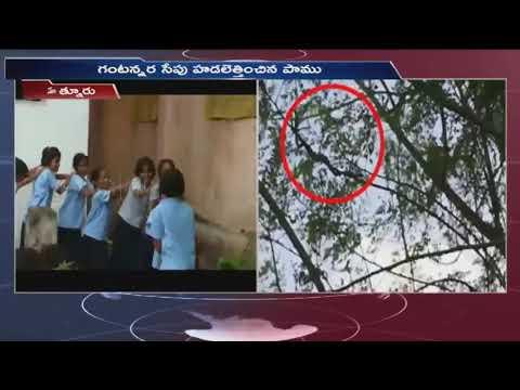 Snake Caught On Tree At Hatnur Govt School PlayGround   Adilabad