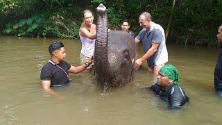 KUALA GANDAH ELEPHANT SANCTUARY - Malaysia