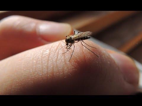 Cтоп кровососы! Натуральные средства от Вездесущих Комаров. Сделать проще простого