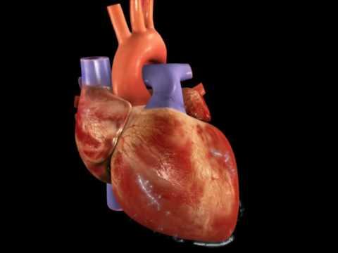 Ipertensione lavoro corso prevenzione
