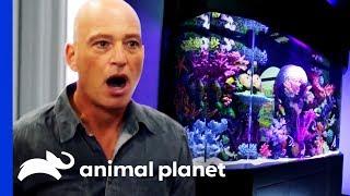Eel or No Eel?: Howie Mandel's Tank Reveal