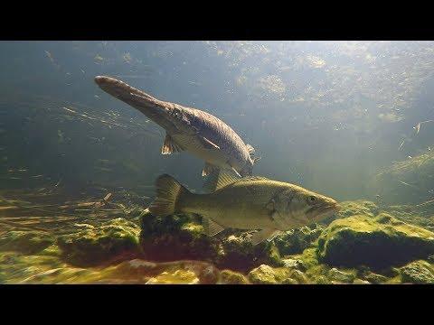 Everglades National Park Fish Tank