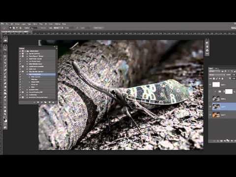 Adobe Photoshop Tutorial 29 - Actions Beginner