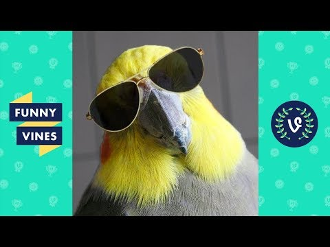 funny birds and parrots compilation 2017 funny vine