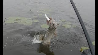 Ловля щуки на озере неро летом