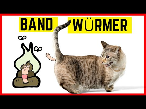 Würmer bei Katzen - Symptome, Gefahren & Behandlung