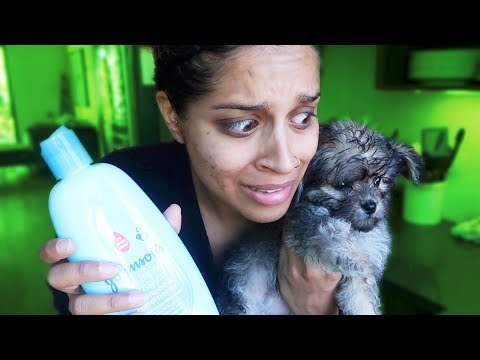 TRYING TO GIVE A PUPPY A BATH