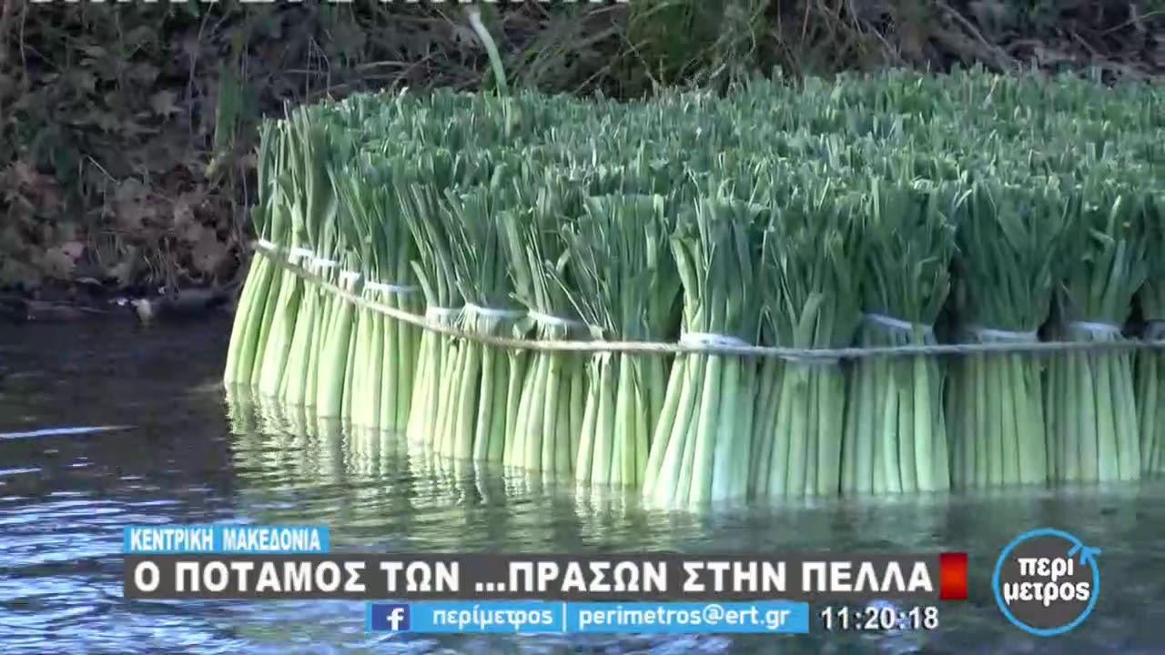 Ο ποταμός των …πράσων στην Πέλλα   19/1/2021   ΕΡΤ