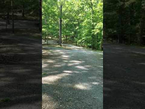 Pano of the wooded campsites.