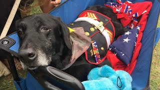 Hero Says Goodbye to Terminally Ill Bomb-Sniffing Dog in Heartbreaking Farewell