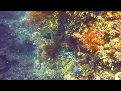 Tauchen Nord-Sulawesi, Bangka, Lembeh Straith & Bunaken, Nord-Sulawesi,Bangka Lembeh Straith & Bunaken,Indonesien