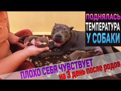 На третий день после родов собаке стало плохо. Что происходит? Щенки растут 1-10 день.