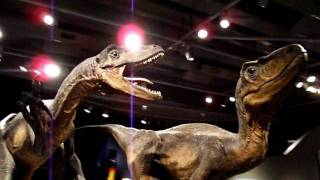 preview picture of video 'Exploring New Zealand #3: Wellington Te Papa Museum'