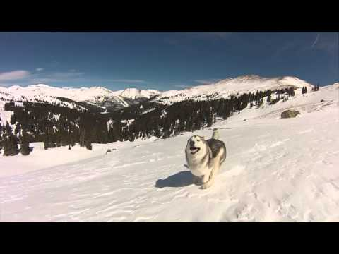 hqdefault - Buenrollo para empezar el dia... Loki corriendo por la nieve