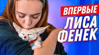 ВПЕРВЫЕ: ЛИСА ФЕНЕК, какает где попало, ЛАЕТ на кошку! Стоит ли заводить?!
