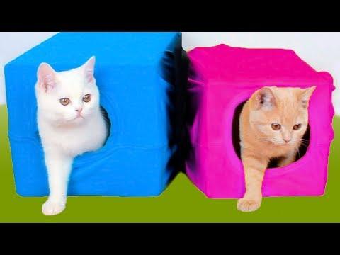 10 Ideias simples para os donos de gatos
