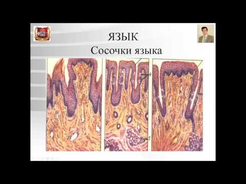 Народные средства излечения гепатита в и с