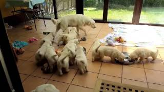 """360 Puppies   - """"the making of"""" for """"Virtual Dream"""" Foundation"""