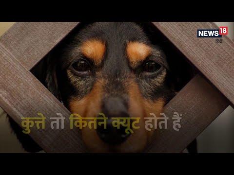 कुत्ता काटेगा या चाटेगा?
