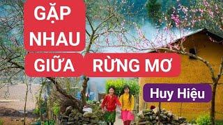 Gặp Nhau Giữa Rừng Mơ (Sáo Trúc độc đáo )   Huy Hiệu Website :saotruchuyhieu.com