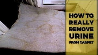 How To Really Remove Pet Urine From Carpet | Lincoln CA