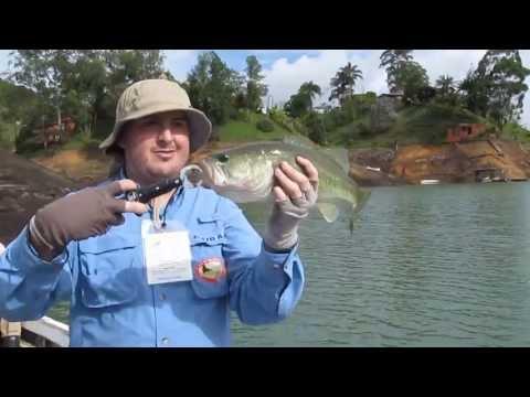 La pesca in maggio 2017 di video sul Fiume Vyatka