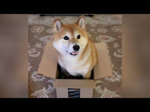 BEST DOG videos you've EVER SEEN - Funny DOG videos