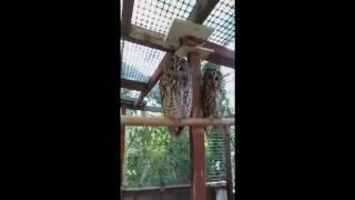 Folkestone Owl Rescue Sanctuary