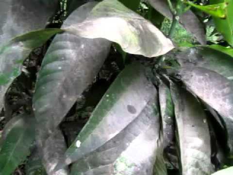 Inaabisuhan ang mga klinika para sa paggamot ng kuko halamang-singaw
