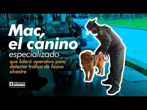 Mac, el canino especializado que lideró operativo para detectar tráfico de fauna silvestre