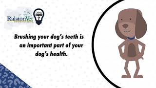 Did You Know Human Toothpaste Is Toxic For Dogs?