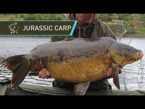 Kevin Nash and Alan Blair Carp Fishing JURASSIC CARP in La Gomera - Nash 2014 Carp Fishing DVD Movie