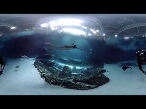 360 Underwater Video from inside Georgia Aquarium\'s Ocean Voyager Habitat