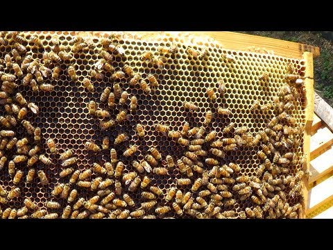 Сколько мёда на стационаре с ГВ ???