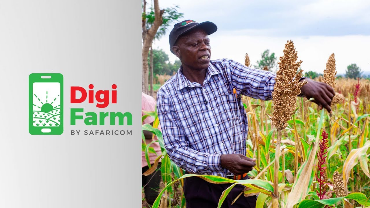DigiFarm Sorghum Valuechain Cultivation in Bungoma County