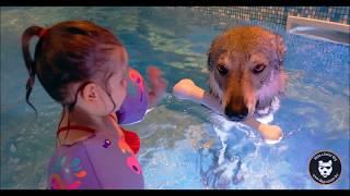 Charleking Radio : Interview Dog Pool et Walking Dog !
