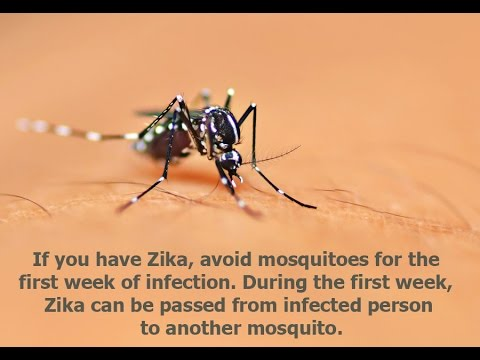 Video What are the symptoms of zika virus
