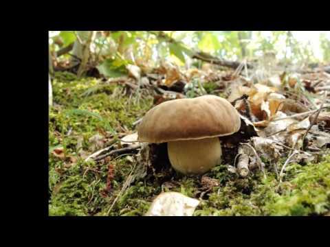 Trattamento al sicuro di un fungo di unghie