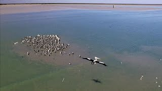 YAWURU LIFESTYLE EPISODE 14 - HUGE FLOCK OF PELICAN while catching salmon in Roebuck Bay
